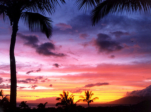 Maui--wow-ee!